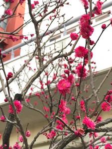 2017入試応援レポート〜2/1海城中学