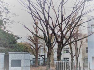 2019入試応援レポート~2/3筑波大附属駒場中等学校